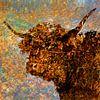 Schotse hooglander in kleur van Frans Van der Kuil thumbnail