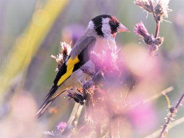Birds van Wieja van der Kamp