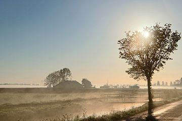 mistige ochtend van Lammie Postmus