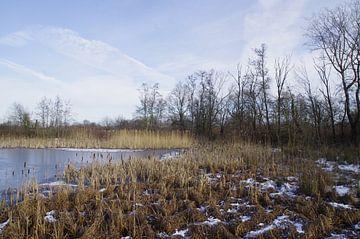 Wintergezicht von Ad Steenbergen