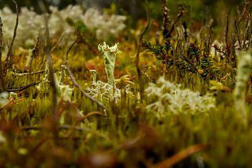 Paddestoel in herfstkleuren van Merijn Loch