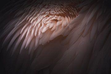 Pink feathers van Sandra H6 Fotografie