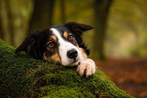 Jindi in het bos