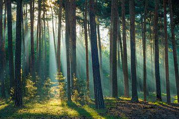 Licht in het bos van Martin Wasilewski