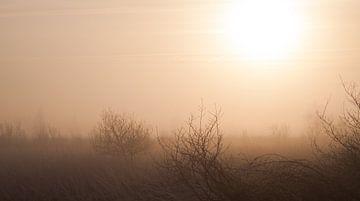 Zonsopkomst in de wildernis van Roel Van Cauwenberghe