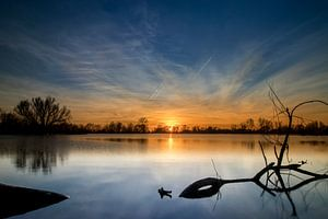 Tak in het water bij zonsondergang