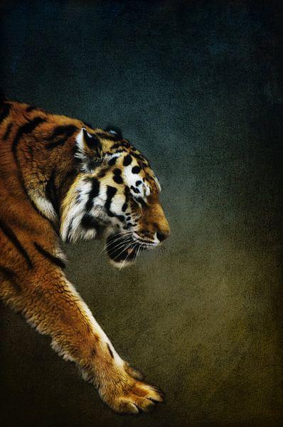 Tiger van Angela Dölling