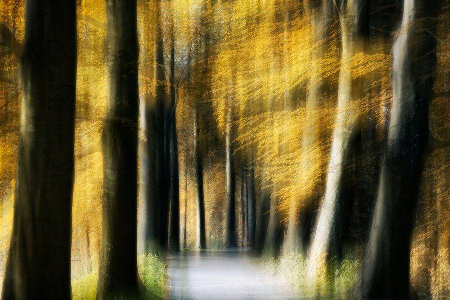 Dromerig bos van licht van Jacq Christiaan