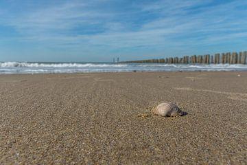 Muschel am Strand von Cadzand-Bad von John van de Gazelle