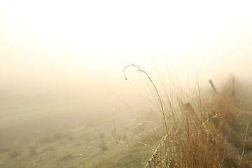 Weiland in de mist van Esther Leijten-Kupers