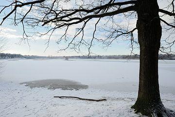 A frozen ies in winter sur