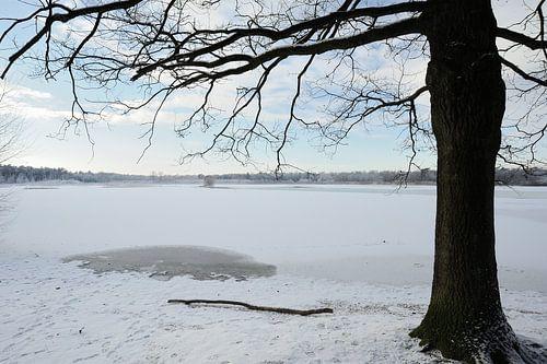 Een dichtgevroren ven in de winter met eik van Gonnie van de Schans