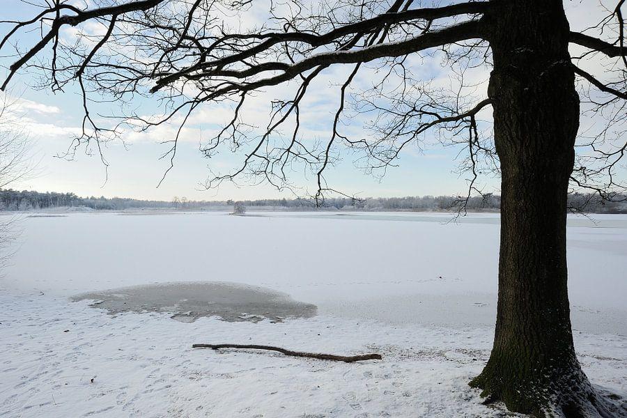 Een dichtgevroren ven in de winter met eik