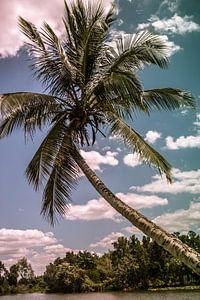 Palmboom van Natascha Friesen Baggen