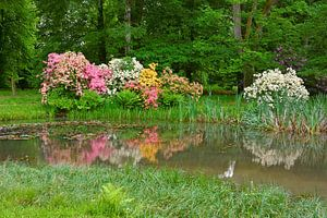 Rhododendron Blossoming  in the Park van Gisela Scheffbuch
