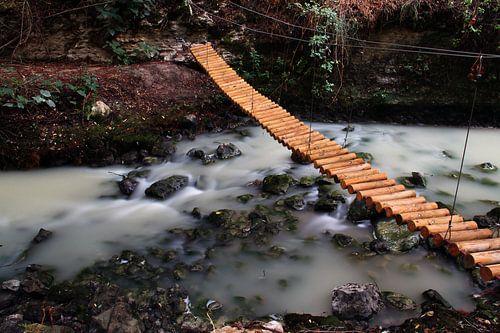 The Tree Bridge