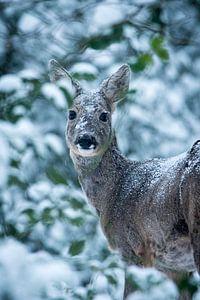 Eine unerwartete Begegnung im verschneiten Wald2 von Jouke Wijnstra Fotografie