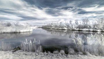 Winternachmittag im Biesbosch von Ad Van Koppen