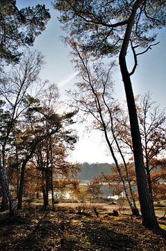 Brabantse Herfst von DoDiLa Foto's