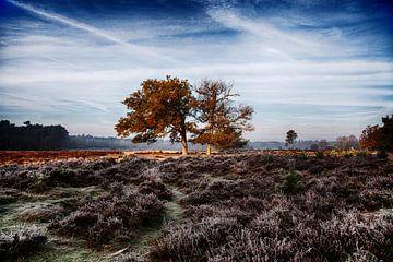 Bäume auf den Mooren der Veluwe von Tim Annink