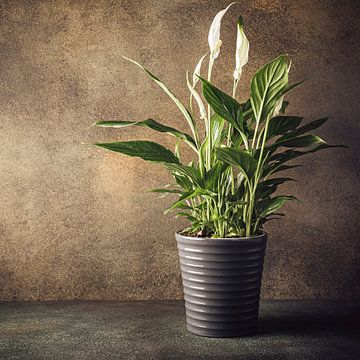 Friedenslilien-Zimmerpflanze im Topf von Iryna Melnyk