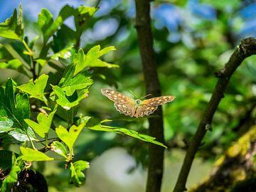 Un papillon sur une feuille