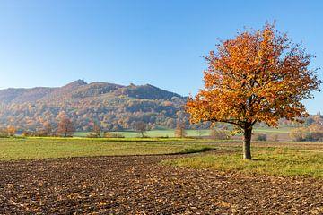 Herbstbaum van