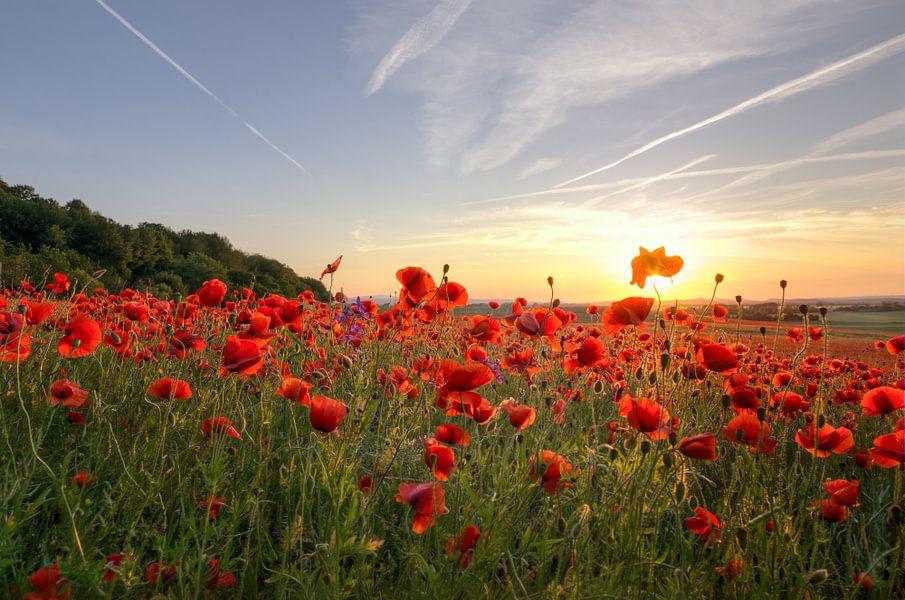 Poppys Sunset