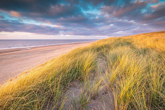 Hollands Duinlandschap