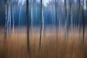 Bos in beweging van Richard van den Hoek