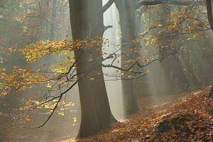Mistig bos in de herfst