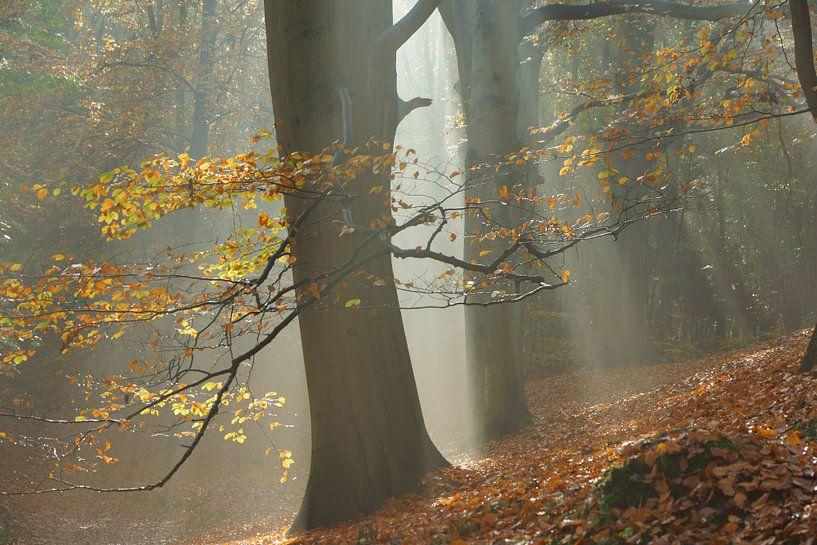 Mistig bos in de herfst van Michel van Kooten