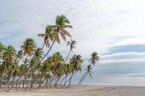 Palmenstrand bij Salalah, Oman