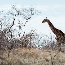 Giraf in de vlakte || Kruger Nationaal Park, Zuid-Afrika van Suzanne Spijkers