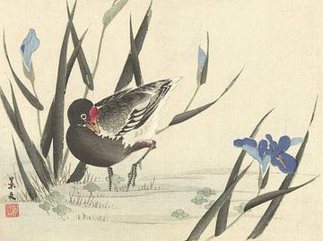 Blässhuhn zwischen blauen Schwertlilien von Matsumura Keibun - 1892