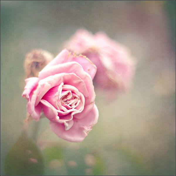 vintage roses van bob van den berg