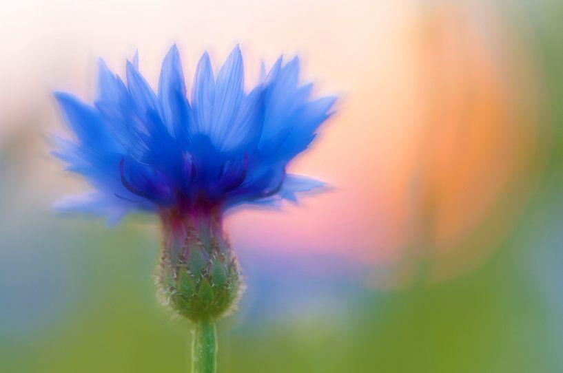 summer blue van jowan iven