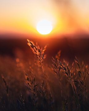 Weizen bei Sonnenuntergang von Wahid Fayumzadah