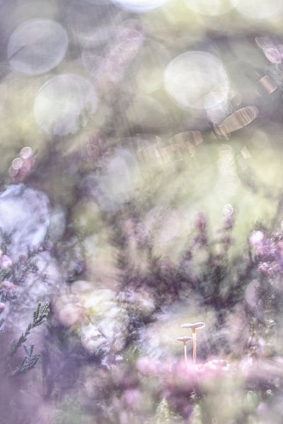 Fantasy of Nature van Bob Daalder