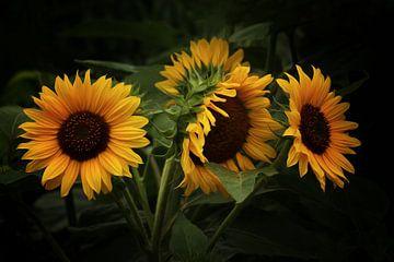 Sonnenblumen van Gabriele Haase