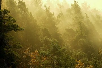 Dennenbos met zonnestralen in de mist van André Post