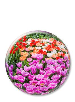 Kristallen bal met verschillende kleuren tulpen op witte achtergrond van Ben Schonewille