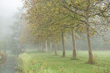 Mistig Amelisweerd langs de Kromme Rijn van Marijke van Eijkeren