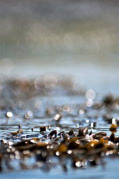 zeewier van Max van Boxel