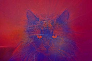 Mean Cat van Leo Huijzer