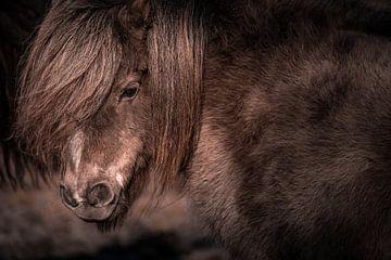 Pony van Jeroen Mikkers