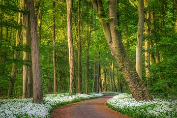 Amsterdamse Bos van Niels Barto