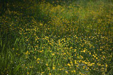 Gelb in Grün von Michael van Eijk