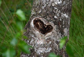 Liefde, hart in boom van Bianca ter Riet