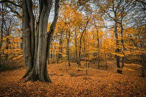 Herfstbos van Peet Romijn